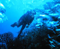 Marine biologist working under water
