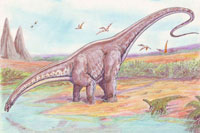 Learn interesting information about the Apatosaurus (Brontosaurus)