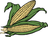 Fun Corn Facts for Kids - Interesting Information about Maize
