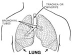 Human Respiratory System Video