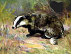 Interesting Information about Badgers