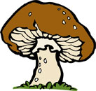 Fun Mushroom Facts for Kids - Interesting Information about Mushrooms