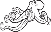 Interesting Information about Octopuses