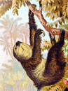Interesting Information about Sloths