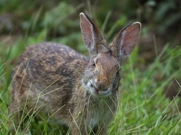 Rabbit  Pictures Photos  Images of Animals  Science for Kids