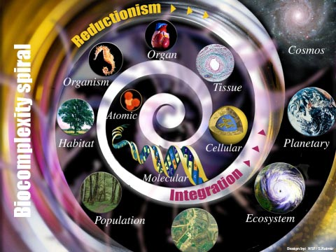 This biocomplexity spiral diagram depicts the multileveled complexity of organisms in their environments, including molecular, cellular, habitat, ecosystem and others.