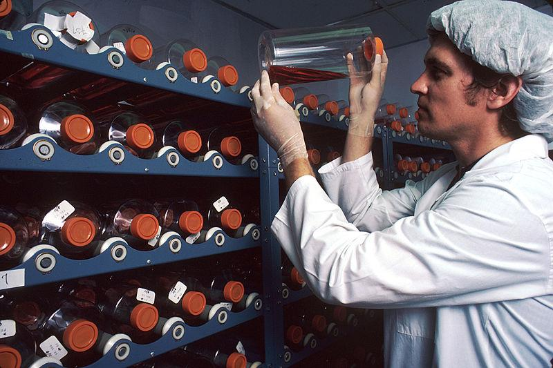 A lab worker carefully handles one of the many monoclonal antibody biology samples held on a number of racks.