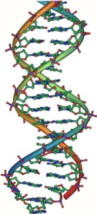 A vertical image of a DNA double helix.