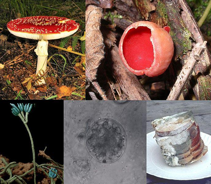 A collage featuring five images of different types of fungi including one that shows some very old and unappetizing bread.