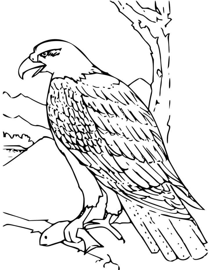 This coloring page for kids features a bald eagle just moments after it caught a fish