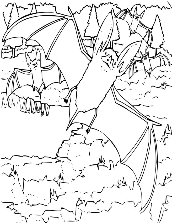 Big Eared Bat Coloring Page for Kids Free Printable Picture
