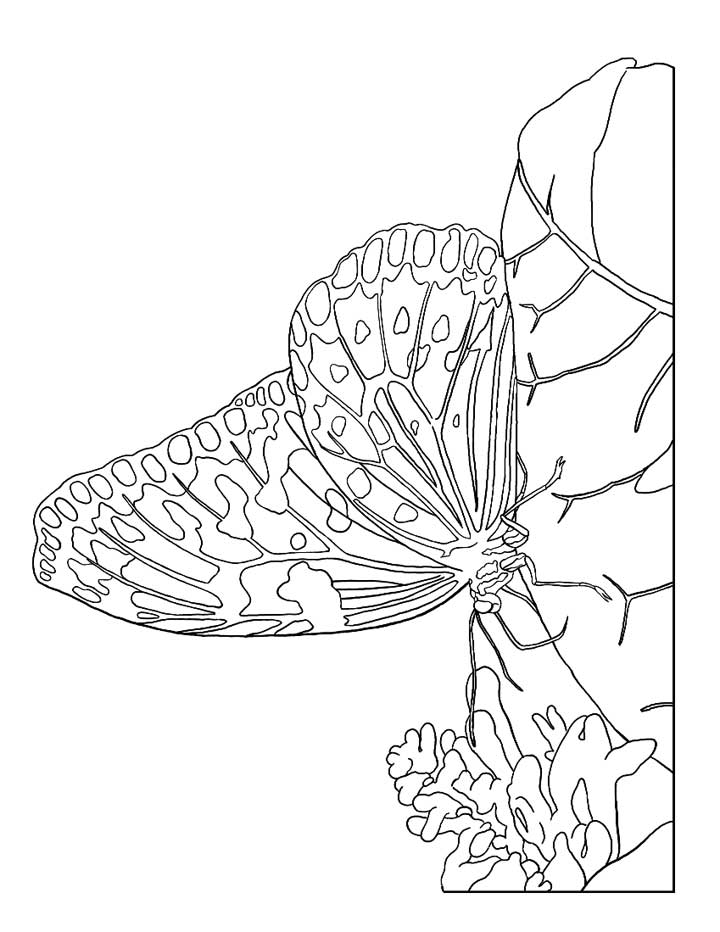This coloring page for kids features a butterfly with beautifullty detailed wings just waiting for some color.
