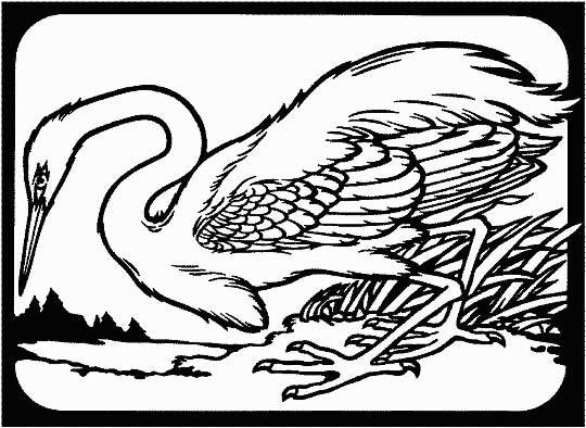 This coloring page for kids features a heron walking along the ground. Color in the picture and help make the heron look bright and colorful.