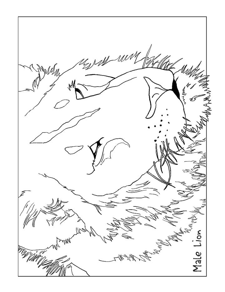 This Coloring Page For Kids Features A Large Male Lion With An Impressive Mane Color