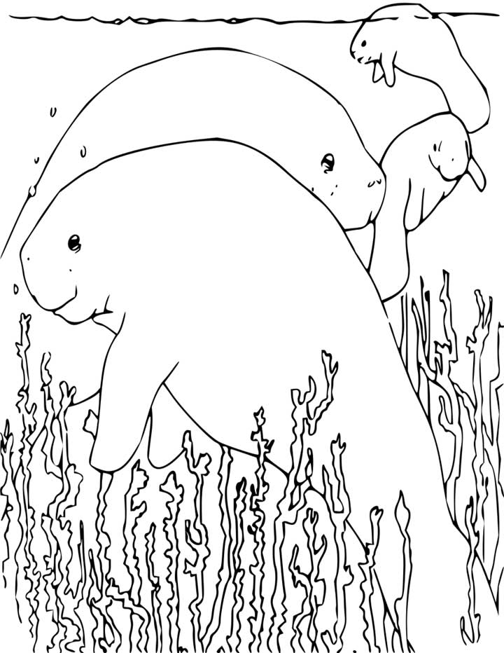 This coloring page for kids features a group of manatees. Manatees are large animals that live in the water and usually eat plants. They are sometimes known as sea cows.