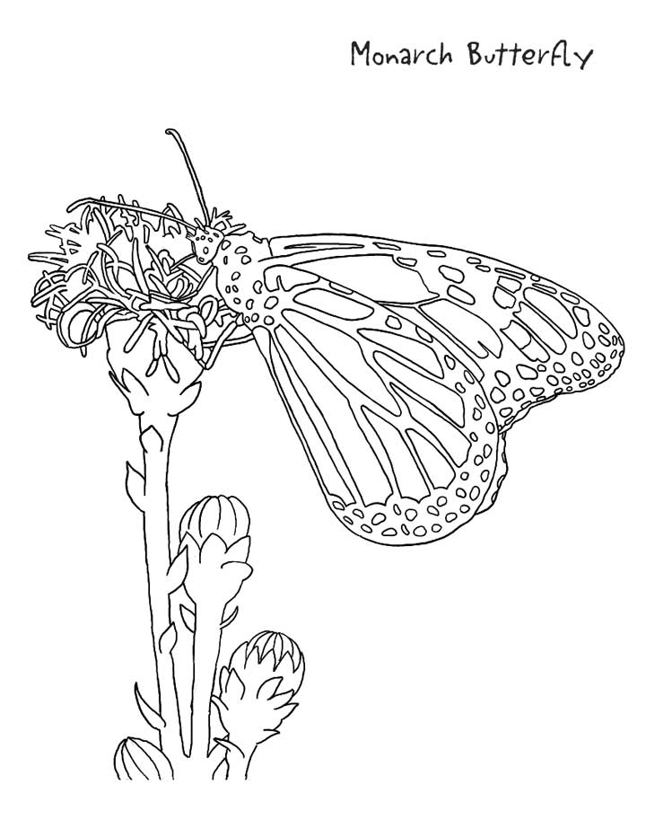 This coloring page for kids shows a monarch butterfly sitting on a flower.