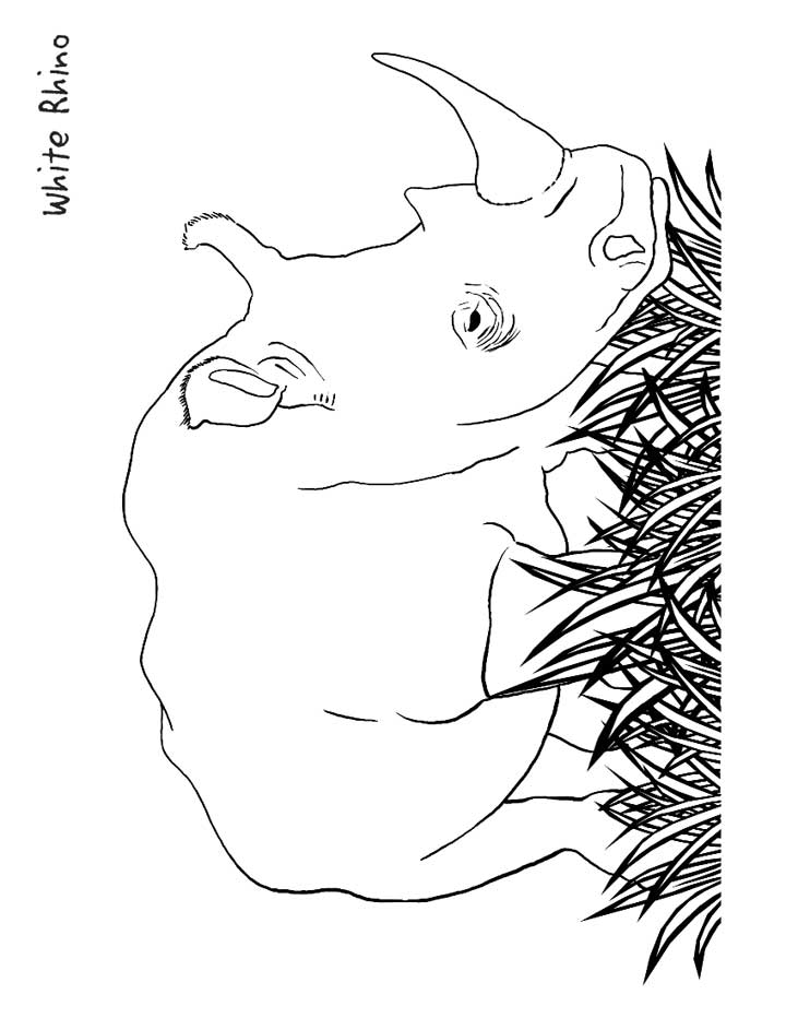 This coloring page for kids features a white rhinoceros standing amongst the grass, it has a large, stocky body and a big horn.