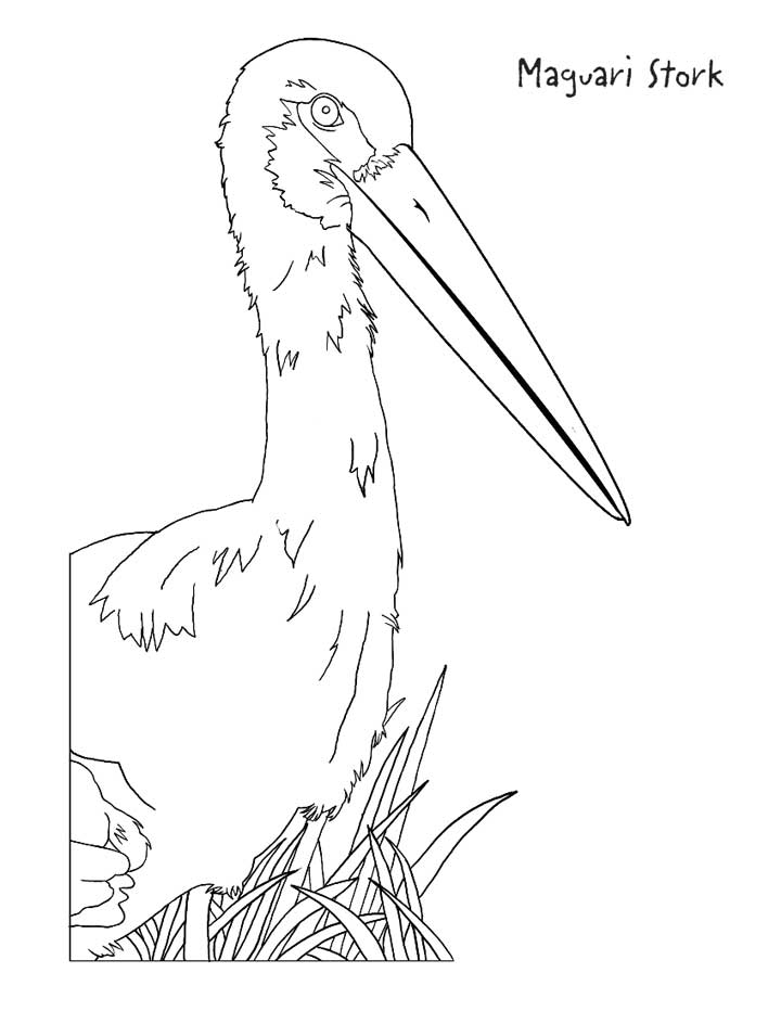 This coloring page for kids features a Maguari Stork standing amongst plants.