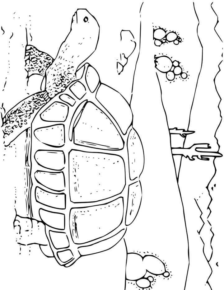 This Coloring Page For Kids Features A Tortoise Walking Past Cactus In A  Hot Desert Landscape