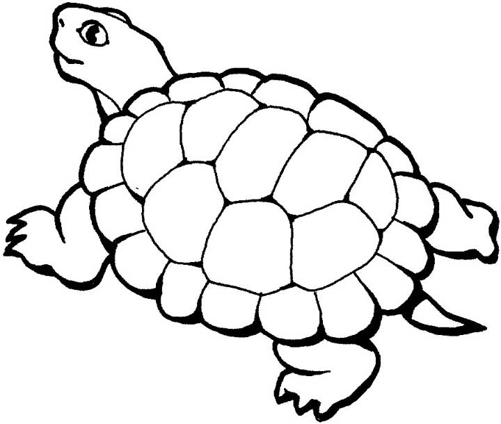 Turtle Coloring Page For Kids Free Printable Picture