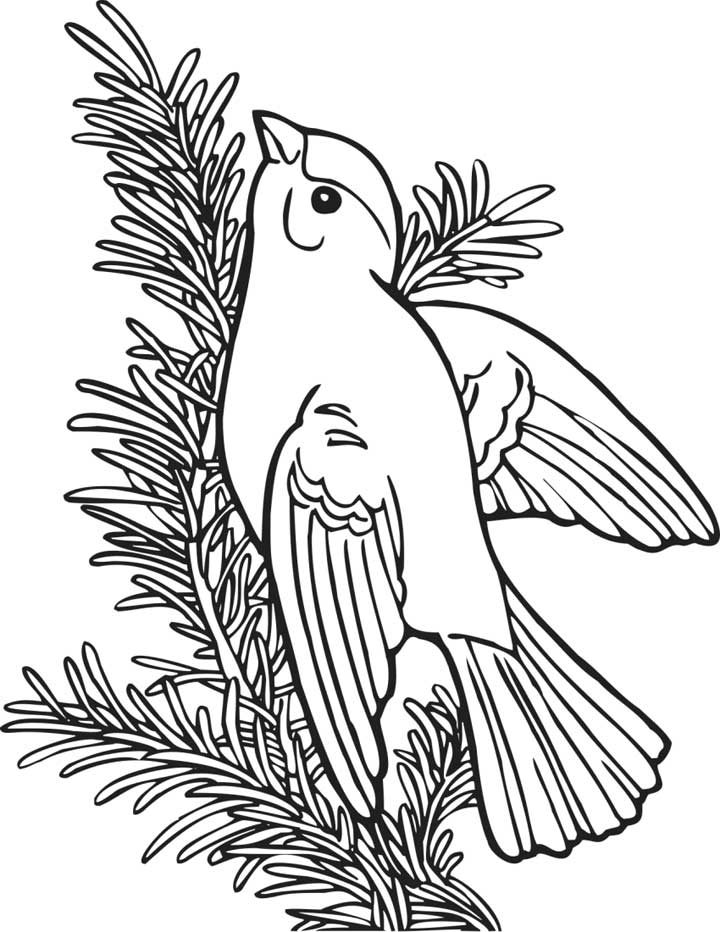 This coloring page for kids features a willow gold finch sitting on the branch of a tree.