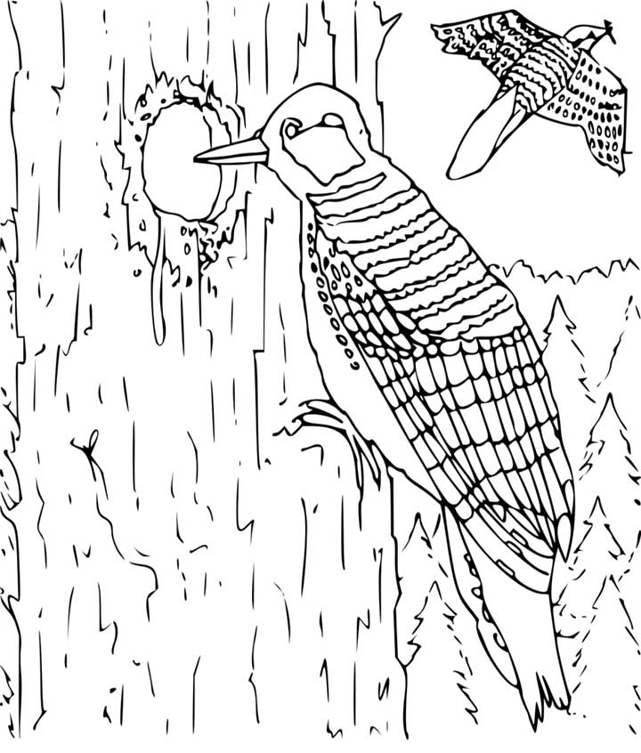 woodpecker coloring page for kids free printable picture. Black Bedroom Furniture Sets. Home Design Ideas