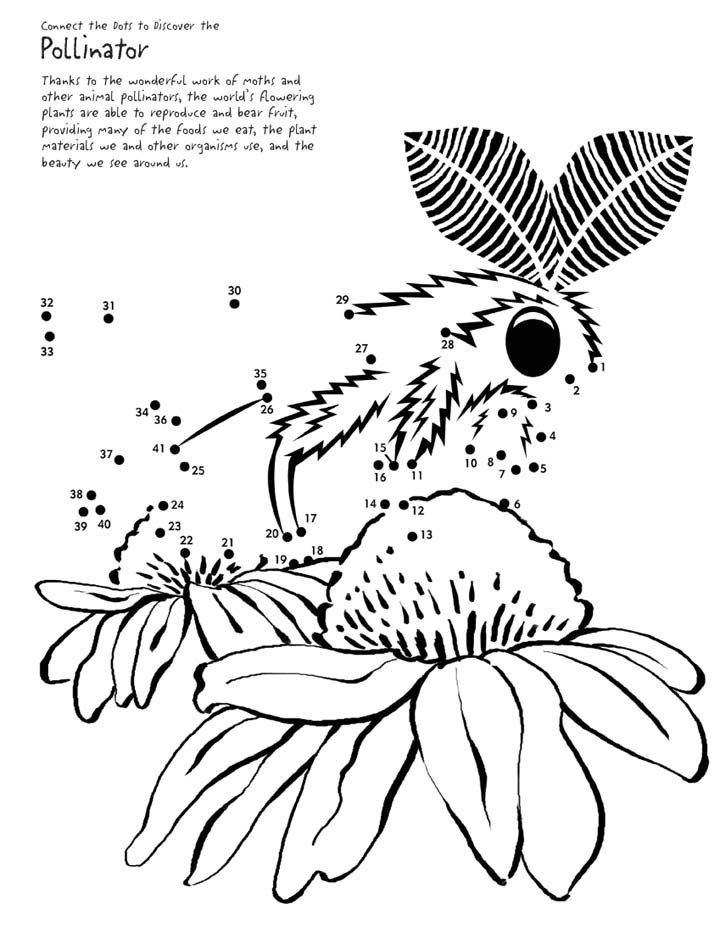 This moth needs your help in order to continue pollinating the flowers, connect the dots and complete the picture.