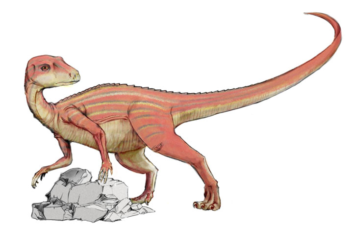 This drawing shows the possible appearance of Abrictosaurus, a dinosaur from the early Jurassic Period (around 200 million years ago) that weighed around 45 kg (100 lb) and reached around 1.2 m (4 ft) in length. The fossil remains of only two Abrictosaurus specimens have ever been found, making it difficult for researchers to make many conclusions about this dinosaur.
