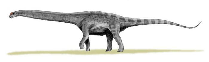 This drawing shows the possible appearance of Argentinosaurus, a dinosaur from the mid Cretaceous Period (around 95 million years ago). The Argentinosaurus was a Sauropod that lived in South America, its remains were first discovered by a man named Guillermo Heredia in Argentina. Although fossil remains of this dinosaur are rare, it is believed by scientists to have been one of the longest and heaviest of all dinosaurs.