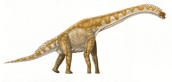 This drawing shows the possible appearance of Brachiosaurus, a Sauropod dinosaur from the late Jurassic Period (around 150 million years ago). The Brachiosaurus was a herbivore (plant eater) and lived in North America.