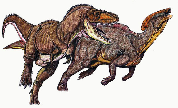 This drawing shows the possible appearance of a Gorgosaurus as it attacks a Parasaurolophus. Gorgosaurus was a Theropod that lived in the late Cretaceous Period (around 75 million years ago). It lived in North America and was from the same family of dinosaurs as the Tyrannosaurus rex, featuring small arms, sharp teeth and a length of around 9 metres (30 feet).