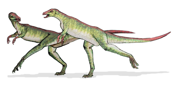 This drawing shows the possible appearance of Lesothosaurus, a small dinosaur from the early Jurassic Period (around 200 million years ago) that measured around 1 metre (3 feet) in length. Lesothosaurus was a herbivore (plant eater), walked on two legs and was probably a fast runner.