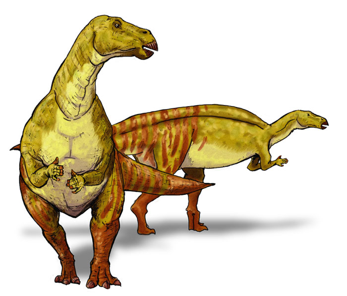 This drawing shows the possible appearance of Nanyangosaurus, a dinosaur from the early Cretaceous Period. Nanyangosaurus was an Iguanodont and lived in an area that is now China. This dinosaur was first described in the year 2000.