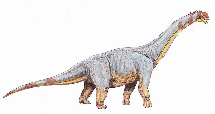 This drawing shows the possible appearance of Paralititan, a dinosaur from the late Cretaceous Period (around 100 million years ago). Paralititan was a huge Titanosaur and its name means 'tidal giant'. There is little fossil evidence of this dinosaur but from the remains that do exist scientists estimate that it could have been 28 metres (85 feet) long and weighed 60 tons.