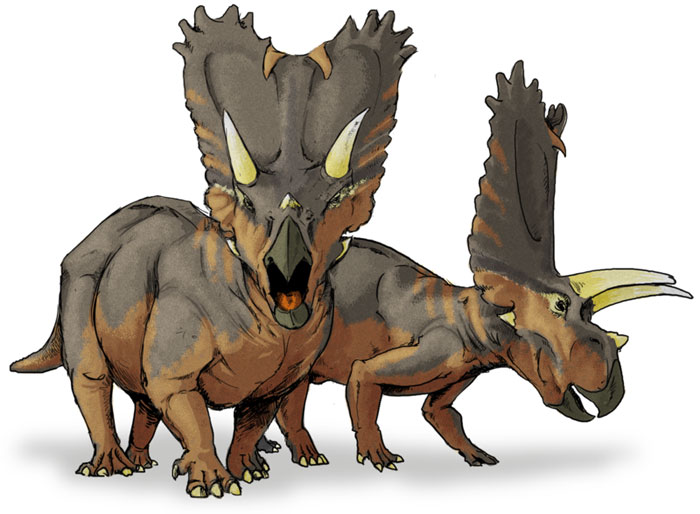 This drawing shows the possible appearance of Pentaceratops, a dinosaur from the late Cretaceous Period (around 75 million years ago). Pentaceratops (meaning 'five horned face') is related to the Triceratops (meaning 'three horned face' and like other Ceratopsid dinosaurs, ate plants. It weighed around 5500 kg (13000 lb) and reached around 8 metres (27 feet) in length.