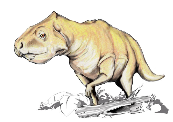 This drawing shows the possible appearance of Prenoceratops, a dinosaur from the late Cretaceous Period (around 80 million years ago). Prenoceratops fossils have been found in the US state of Montana. It belonged to a family of dinosaurs known as Ceratopsia and was a herbivore (plant eater).