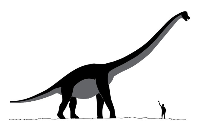 This picture shows a scale size comparison between a human and a dinosaur called Sauroposeidon. Sauroposeidon was a huge Sauropod from the early Cretaceous Period (around 112 million years ago). Scientists estimate that it reached a length of around 34 metres (112 feet). Sauroposeidon is named after the Greek god Poseidon and means 'earthquake god lizard'.