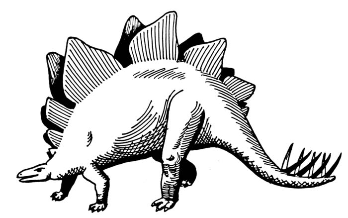 This picture shows a simple black and white Stegosaurus drawing. Stegosaurus was a heavily built dinosaur from the late Jurassic period (around 150 million years ago).