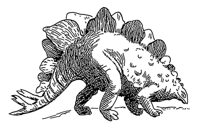 This picture shows a line art drawing of a Stegosaurus, a dinosaur from the late Jurassic Period, around 150 million years ago.