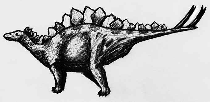 This picture shows a Stegosaurus pencil sketch. Stegosaurus was a large, herbivorous dinosaur from the late Jurassic Period.