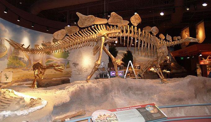 Image result for Stegosaurus skeleton