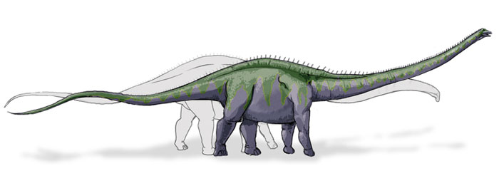 This drawing shows the possible appearance of Supersaurus, a dinosaur from the late Jurassic Period. Supersaurus was a massive Sauropod that could have reached up to 34 metres (112 feet) in length and was related to the Apatosaurus.