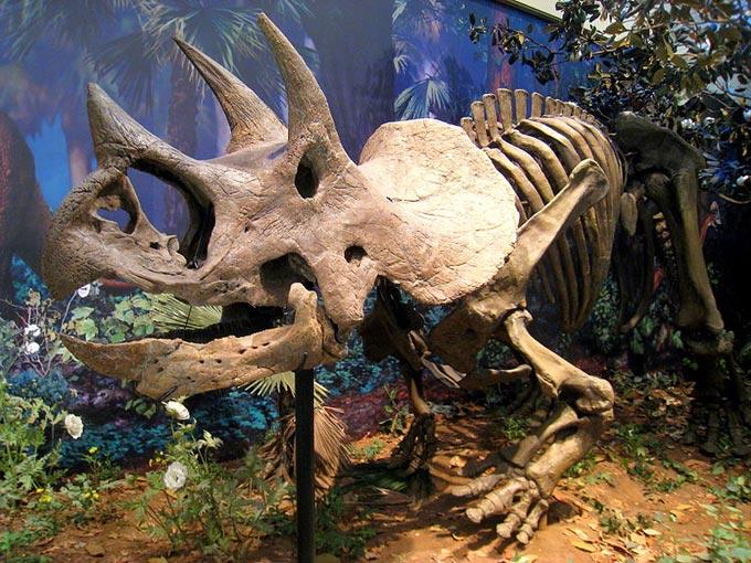 Humans On Display At Museum Of Natural History