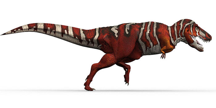 This excellent CGI picture shows a Tyrannosaurus rex dinosaur running from a side on view.