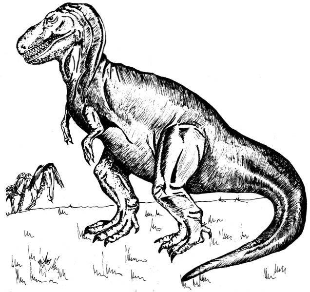 Dinosaur World 66 X 54 Lined Curtains Tie Backs: Tyrannosaurus Rex Drawing