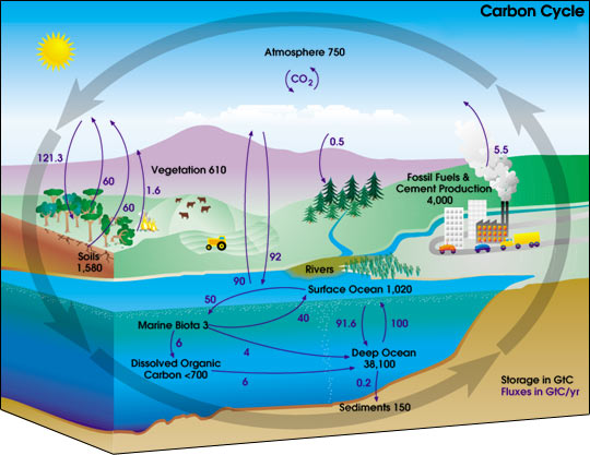 This carbon cycle diagram shows how carbon moves from one part of the Earth to another. Measured in gigatons, the storage and annual exchange involves oceans, vegetation, soil, fossil fuels, the atmosphere and more.