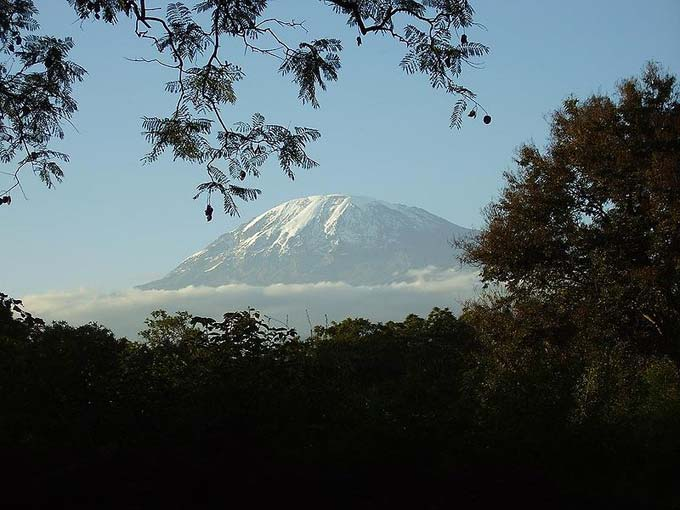 Seen through the trees, this photo shows Mount Kilimanjaro, the tallest mountain in Tanzania and the whole of Africa. The majestic landmark has a height of 5892 metres (19340 feet) above sea level.