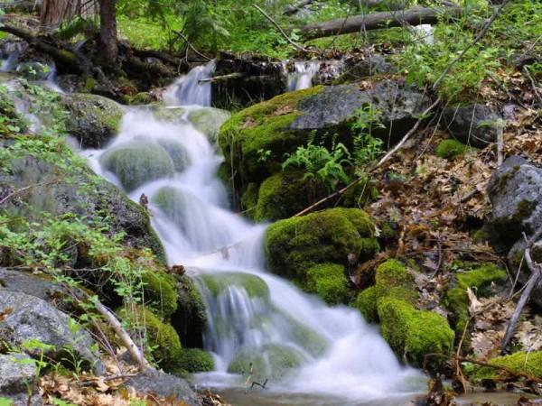 The water in this stream flows fast along the mossy rocks.