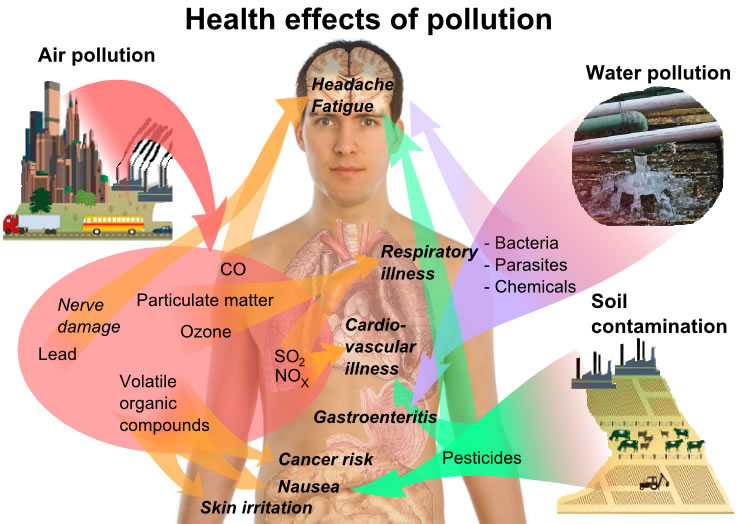 This diagram lists a number of health effects that arise from different types of pollution. Soil contamination, water pollution and air pollution can lead to conditions such as respiratory illness, nerve damage, cancer and skin irritation.