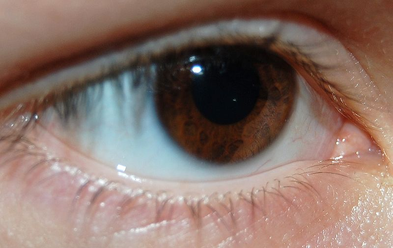 This extreme close up image shows a brown human eye. The photo  gives a detailed view of the pupil and iris